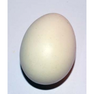 PERFECT EGG